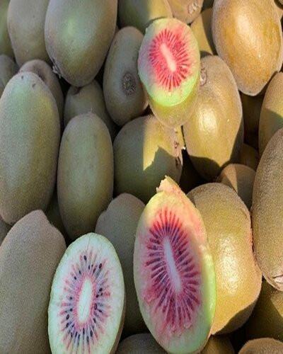 Red kiwi organic (400 gm)-रेड किवी अर्गानिक (४००) ग्राम