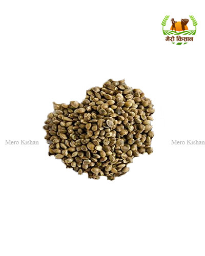 Bhang Seeds (500 gm)