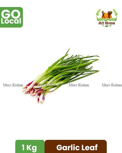 Garlic Leaf - लसुन पत्ता