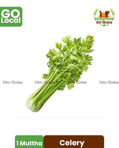 Celery - सेलेरी पत्ता